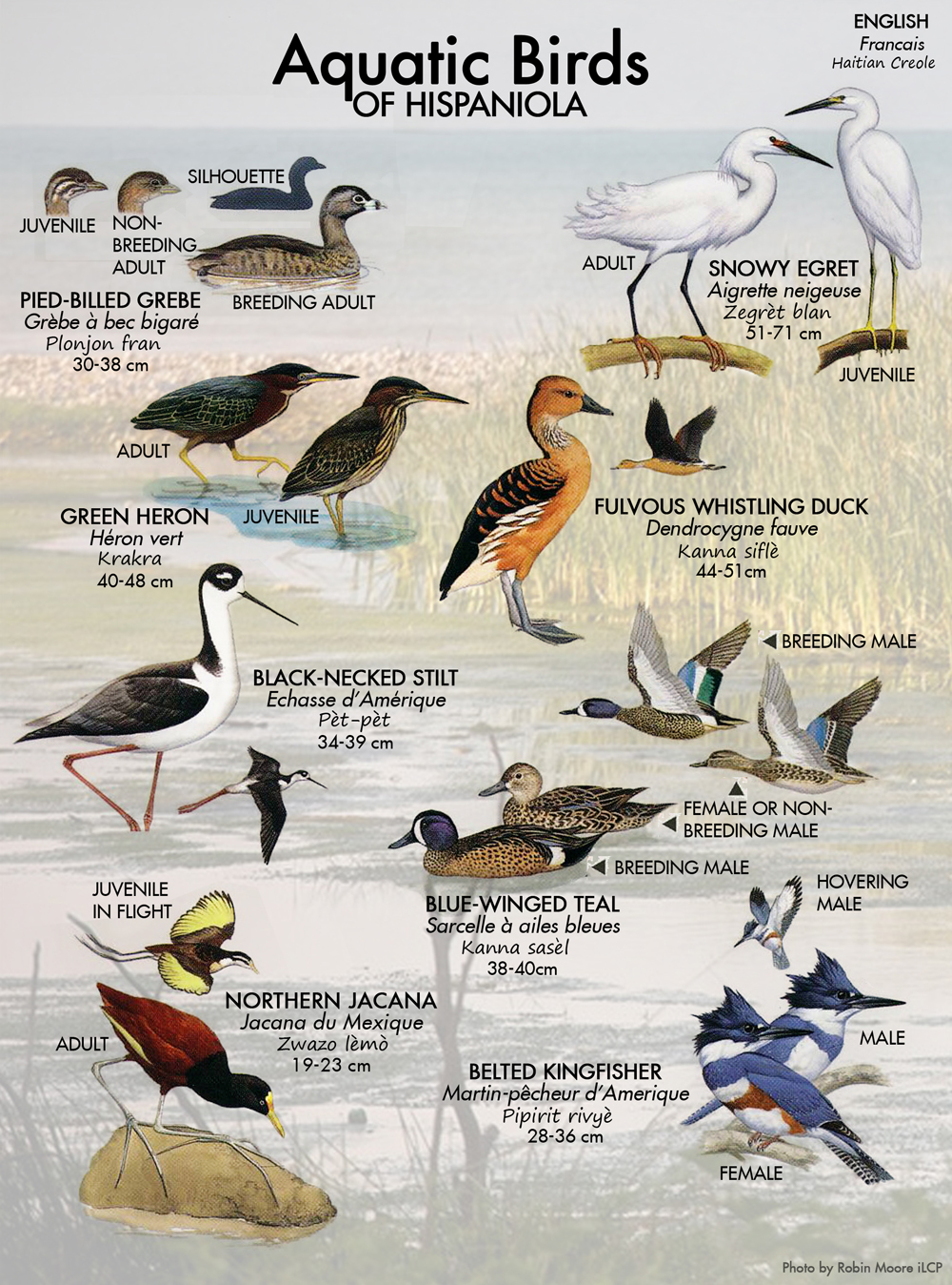 Aquatic Birds